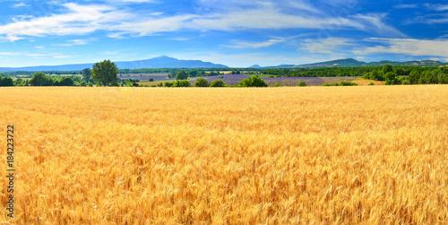 Keuken foto achterwand Oranje Wheat field in summer countryside