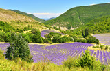 Lavender field in summer countryside - 184224108