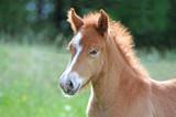 Horse - 184238166