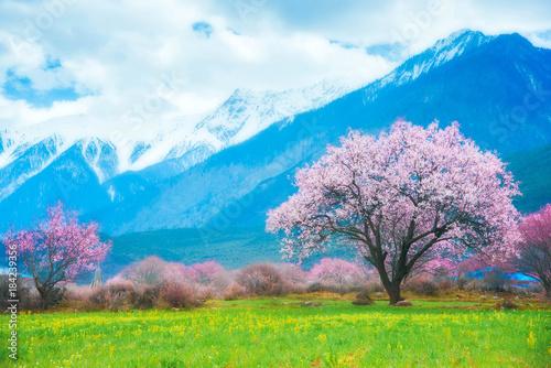Foto op Canvas Blauw Peach blossom