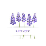 Card with stylized lavender - 184239736