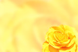 Blurred background with rose of yellow color - 184244587