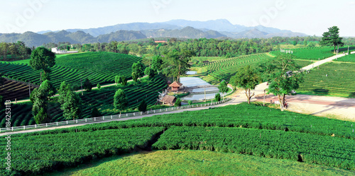 Keuken foto achterwand Blauwe hemel Choui Fong Tea Chiang Rai Thailand