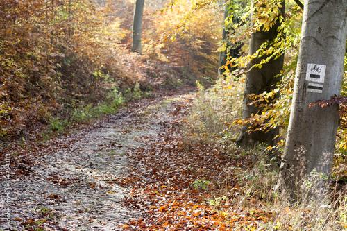 Staande foto Weg in bos szlak turystyczny w lesie bukowym