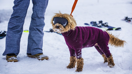 dog in hilarious goggles