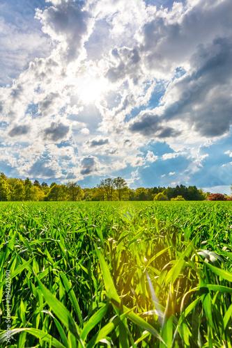 Tuinposter Natuur Maisfeld mit Gewitterwolken