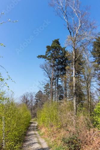 In de dag Weg in bos Frühlingsspaziergang