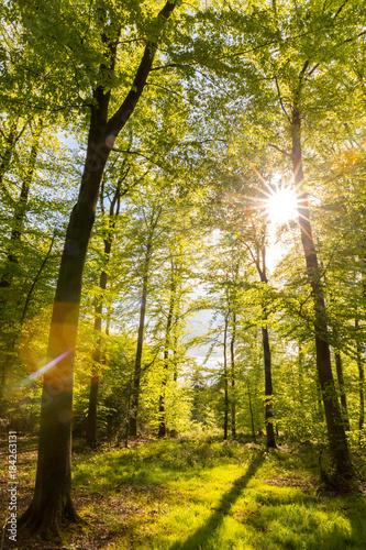Lichtdurchfluteter Wald - 184263131