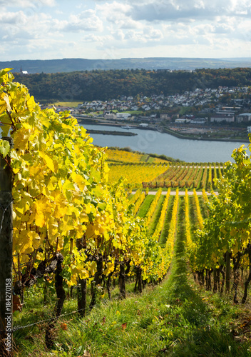 Foto op Aluminium Wijngaard Rhine valley with vineyards