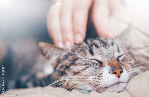 hand stroking a cat