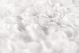 Soft ethereal white background of flower petals - 184314718