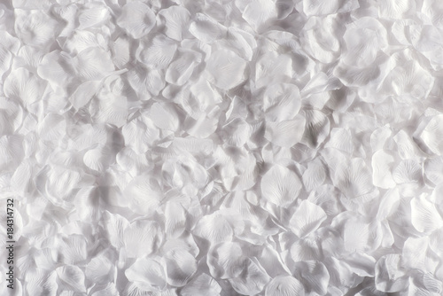 Foto Murales White background of delicate flower petals