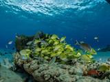 Riffe Curacao - 184325160