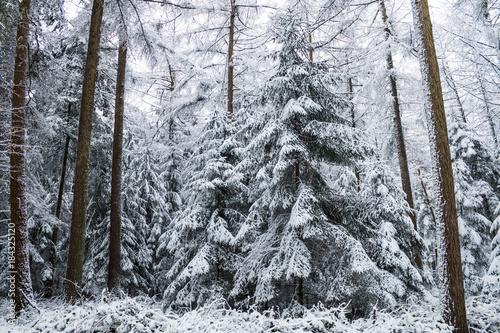 Foto op Canvas Grijs Winter im Wald