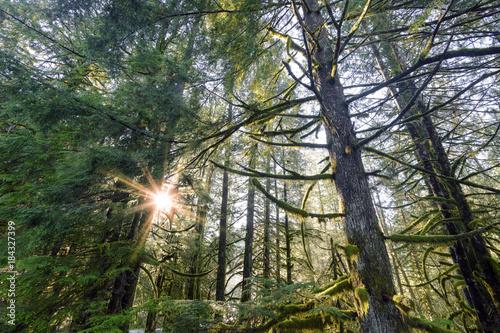 Foto op Aluminium Khaki Rain Forest Pacific North West British Columbia Landscape