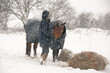 Pony getting a hay feed & some love in the snow.