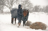 Pony getting a hay feed & some love in the snow. - 184327548