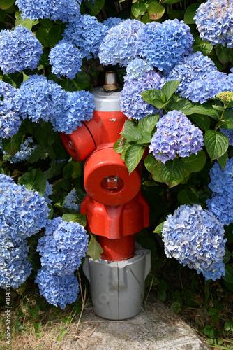 Plexiglas Hydrangea Hydrant mit Hortensien