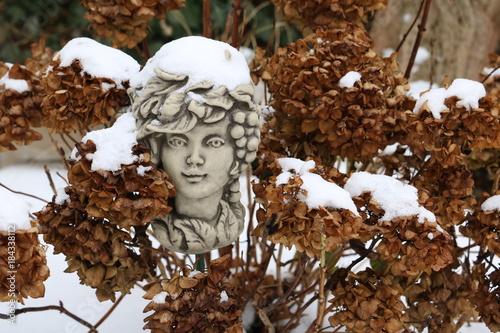 Plexiglas Hydrangea Hortensie im Winter