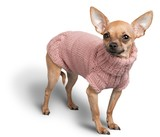 Chihuahua Wearign a Pink Sweater