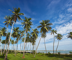 Palm tree over horizon in tropic landscape
