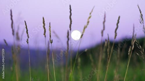 Fotobehang Purper Blurred full moon rising over Altai Mountains, Kazakhstan, seen through tall green grass on summer night