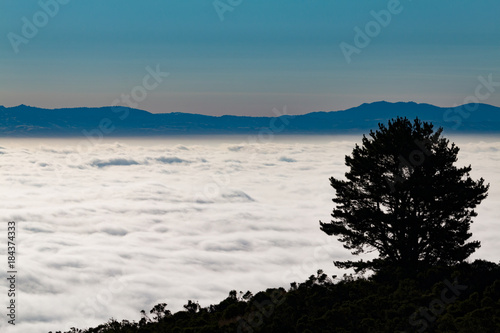 Papiers peints Morning Glory California Sea of Clouds Morning Blue Tree