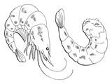Shrimp graphic black white isolated sketch illustration vector - 184394347