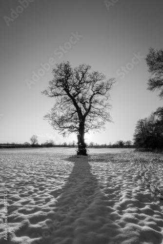 samotne-drzewo-czarno-biale-zima