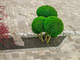 Kleiner Ziergarten mit kugelförmig geschnittenen Büschen Felsen und Betonpflaster - Small ornamental garden with spherical cut bushes, rocks and concrete pavement  - 184413311