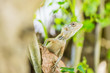 Tropical lizard, colorful blurred background