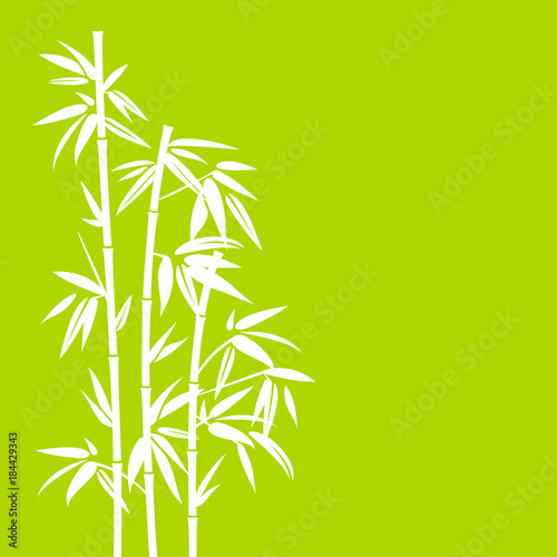 Bamboo White/Green