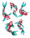 Koi fish on Japanese style for your design - 184430709