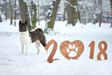 Adorable fluffy dog standing in the winter forest happy new year greeting card snow cold frosty sign numbers 2018 symbol holiday party festive celebrating tradition calendar concept.