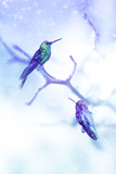 Little fantastic blue birds colibri in the snow and frost on the background of winter tree. Artistic Christmas winter image. Selective focus.