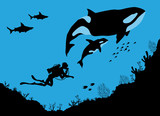 Underwater wildlife, killer whales and Divers - 184461327