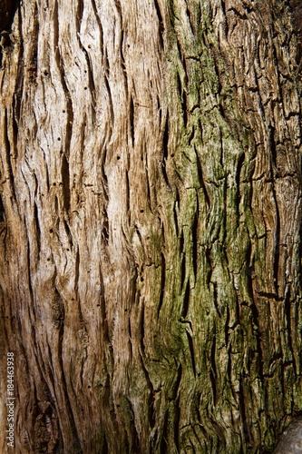 Tronco d'albero close up. Texture.