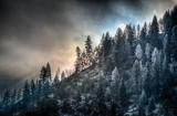 Idaho Panhandle National Forest - 184464591