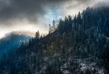 Idaho Panhandle National Forest - 184464981
