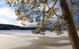 Winter landscape in Finland. Snowy ground and lake ice with sunlight. Beautiful moment on a cold morning. - 184477942