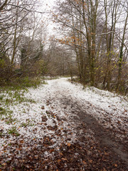 winter country muddy pathway through forest trail lake side