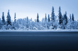 road in winter forest - 184490779