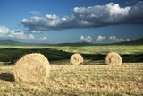 Rural landscape with rolls of hay, Tuscany, Italy - 184490791