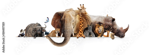 Safari Animals Hanging Over White Banner