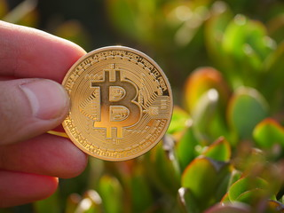 Hand holding golden bitcoin BTC coin in sunny garden outdoors, macro closeup. Investment concept.