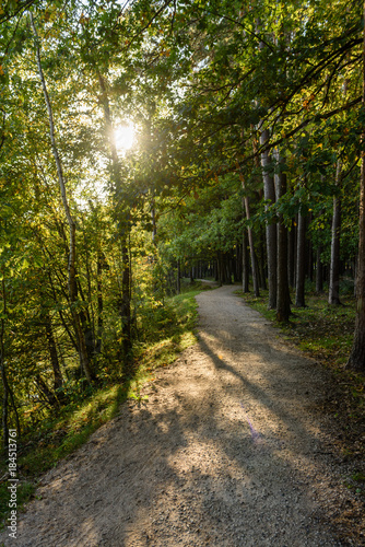 Papiers peints Route dans la forêt empty road in the countryside in summer. gravel surface