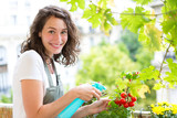 Young woman watering tomatoes on her city balcony garden - Nature and ecology theme - 184521310