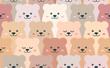 Bears - 184543326