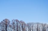 冬 木立 素材 - 184563170