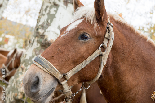 Plexiglas Paarden Portrait of a beautiful wild horse
